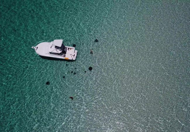 Stingrays around boat