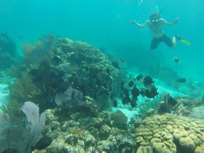 snorkel guest 1
