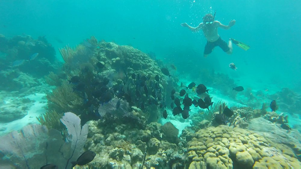 Explore The Beauty Of Caribbean: Stingray City And Snorkeling Tours