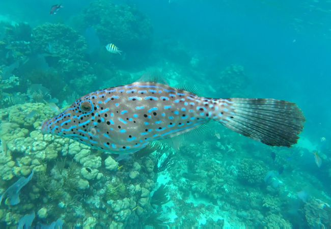 GOPR-filefish